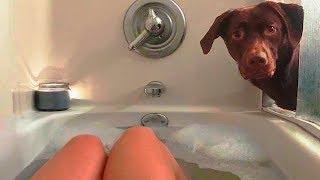 Dog Love ???? Cute and Funny Dog Videos Compilation (2018) Perros Adorables Video Recopilación