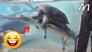 BEST FUNNY ANIMAL(Dogs,Cats...) VIDEOS EVER YOU HAVE TO SEE! ????