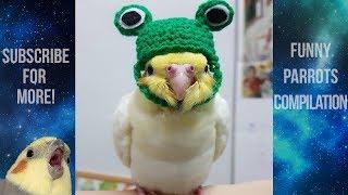 Funny Parrots and Cute Birds Compilation #82 - 2018