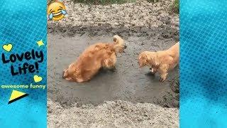 Funny Videos 2019 | Funny Pets Compilation | Funniest pets and animals | #6 | Lovely Life Vines