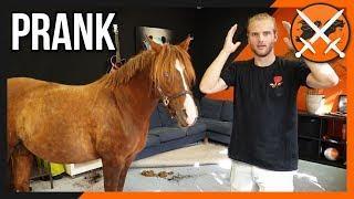 Paard in kamer van beste vriend prank (GEEN CLICKBAIT) | Maandag Moeilijkheden #67