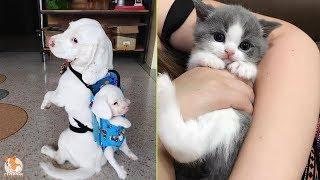 TikTok Pets: Funny and Cute Pets Compilation ???? #1 - CuteVN