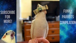 Funny Parrots and Cute Birds Compilation #16 - 2018