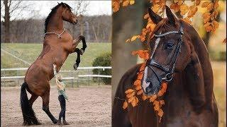 Cute And funny horse Videos Compilation cute moment of the horses - Cutest Horse #14