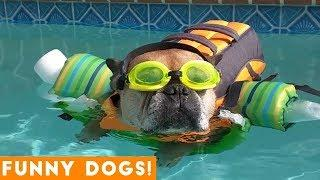 Good Dogs Best Dog Videos Animals Compilation | Funny Pet Videos June 2018