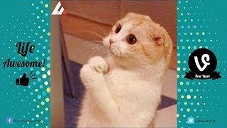 Try Not To Laugh Challenge - 23 Funny Cats Videos You'll Die Laughing