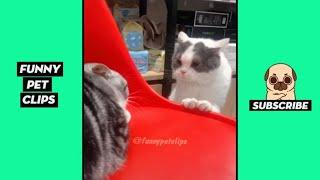 Funny Cute Animals: Tik Tok Pets #59