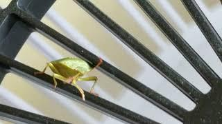 Extreme Sports Green Bug