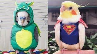 Cute Is Not Enough ???? Funny and Cute Parrots Videos Compilation #73