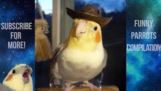 Funny Parrots and Cute Birds Compilation #67 - 2018