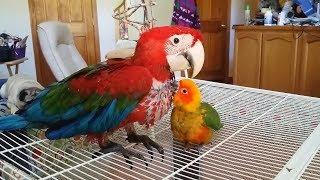 Super Cute And Funny Parrots Compilation 2018