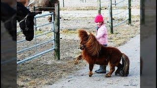 Cute And funny horse Videos Compilation cute moment of the horses - Soo Cute! #32
