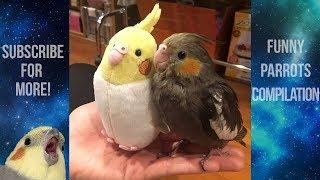 Funny Parrots and Cute Birds Compilation #83 - 2018