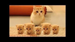 TRY NOT TO LAUGH or SMILE Watching Funny Cats and Dogs ???? If You Laugh You Lose