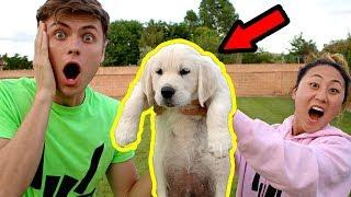I GOT CARTER A PUPPY!! (PRANK)