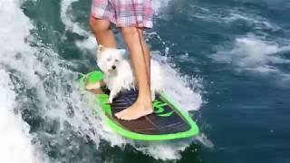Extreme Sport Pets   Funny Pet Compilation