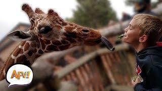 Ultimate Funny Pet Videos vs. Epic Kids Fails Compilation | AFV Funniest Videos 2018