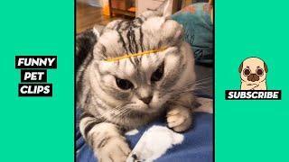 Tik Tok Pets: Funny Cute Animals #37