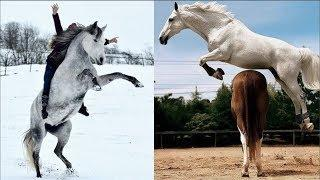 Cute And funny horse Videos Compilation cute moment of the horses - Cutest Horse #2