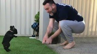 Funny And Cute French Bulldog   French bulldog Puppies   Funny dog videos try not to laugh #3