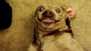 ???? Funniest ???? Dogs and ???? Cats - Awesome Funny Pet Animals' Life Videos ????