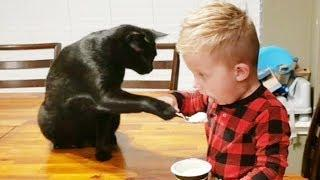 Cute Baby and Cats Funny Moments -  Funny Moments Video