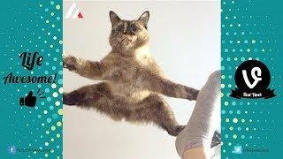 Try Not To Laugh | Best Funny Cat Video to Make You Laugh