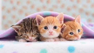 Baby Cats #9 ???? Funny and Cute Baby Cat Videos Compilation (2018) Gatitos Bebes Video Recopilacion