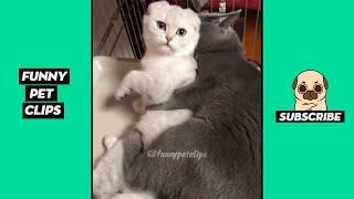 Funny Cute Animals: Tik Tok Pets #53