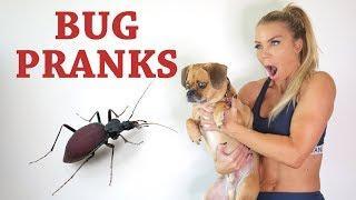 Scary Bug Prank Compilation | Lauren Drain