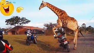 FUNNY AND AMAZING VIDEOS ???????????? BEST COMPILATION ???????????? #10