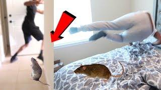 RAT PRANK ON COREY FROM CARMEN AND COREY!!