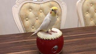 Funny And Cute Dancing Parrots Compilation 2018