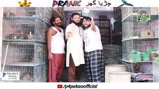 | CHIRYA GHAR PRANK | By Nadir Ali & Asim Sanata In | P4 Pakao | 2018