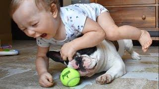 Funny Babies and Dogs Playing Together - Cute Baby Video