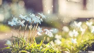 Relaxing Piano Music - Film Music on Piano - Movie Soundtracks