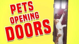 Try Not To Laugh At Dogs And Cats Opening Doors | Funny Pets Compilation