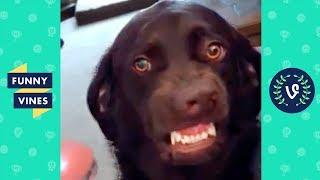 [50+ MIN] TRY NOT TO LAUGH - Funniest Pets & Animals | Funny Videos December 2018