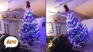 Funny and Cute Christmas Tree Fails   AFV Funniest Fail Videos