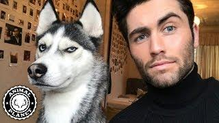 Tik Tok Animals ???? Funny Cats and Dogs Videos Compilation (2019) Perros y Gatos Graciosos Videos