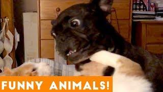 Funniest Pets & Animals of the Week Compilation January 2019 | Funny Pet Videos