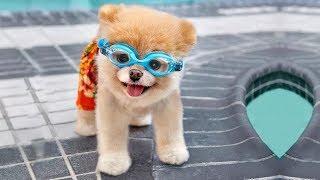Cute Is Not Enough ???? Funny Cats and Dogs Videos Compilation (2018) Perros y Gatos Recopilación