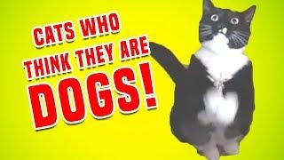 Cats Who Think They Are Dogs   Funny Cat Compilation
