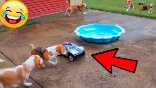 FUNNY ANIMALS COMPILATION ???????????? CUTE PETS ???????????? #4