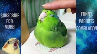 Funny Parrots and Cute Birds Compilation #43 - 2018