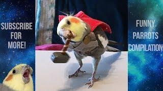 Funny Parrots and Cute Birds Compilation #17 - 2018