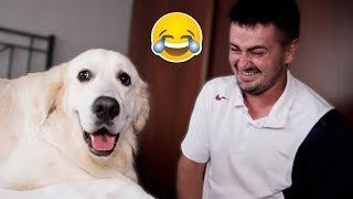 """My Dog Reacts to the Words """"I Love You"""" [FUNNIEST REACTION]"""