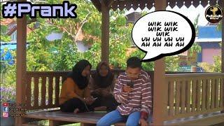 """Prank lagu Thailand """"Wik wik wik wik"""" Grobogan #1"""