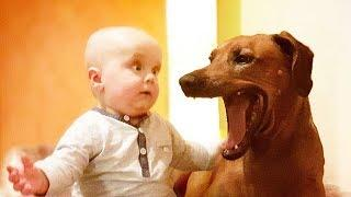 Funny Babies and Dogs are Best Friends 2 - Fun and Fails Baby Video