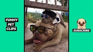 Tik Tok Pets: Funny Cute Animals #35